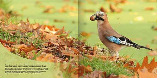 Nederlandse tuinvogels
